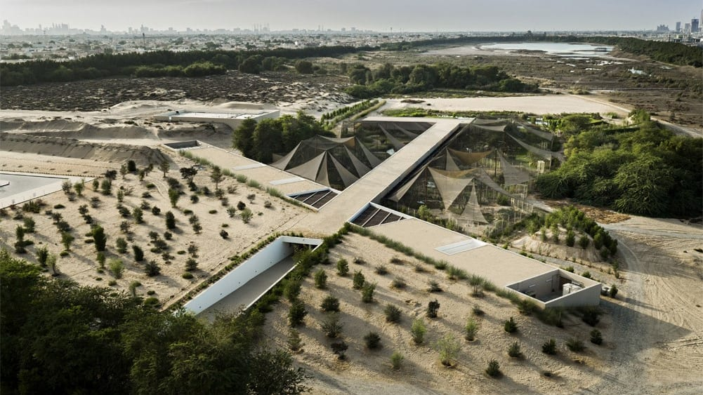ألمانية تعشق الحياة البدوية وتربي الإبل في صحراء دبي