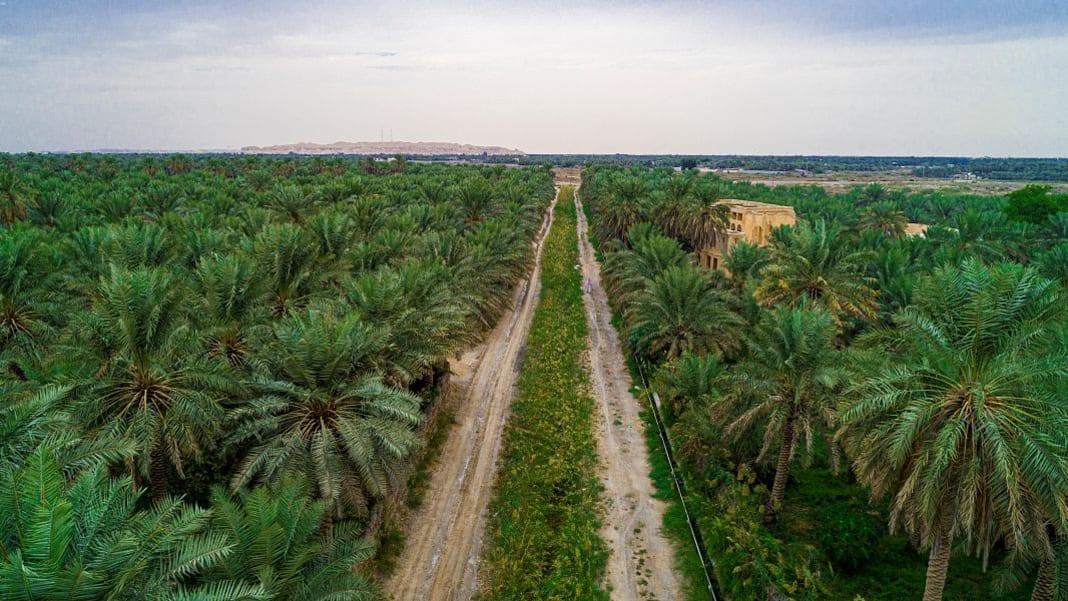 واحة الأحساء..الأكبر في العالم في المملكة العربية السعودية