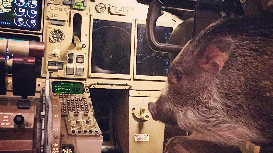 الحيونات الأليفة على متن الطائرة