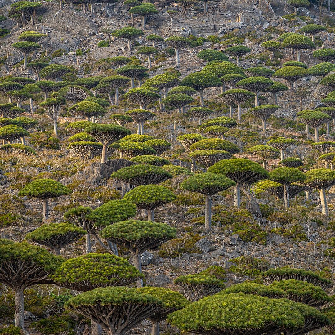 تلقب بالجزيرة المباركة.. اكتشف سحر جزيرة سقطرى في اليمن
