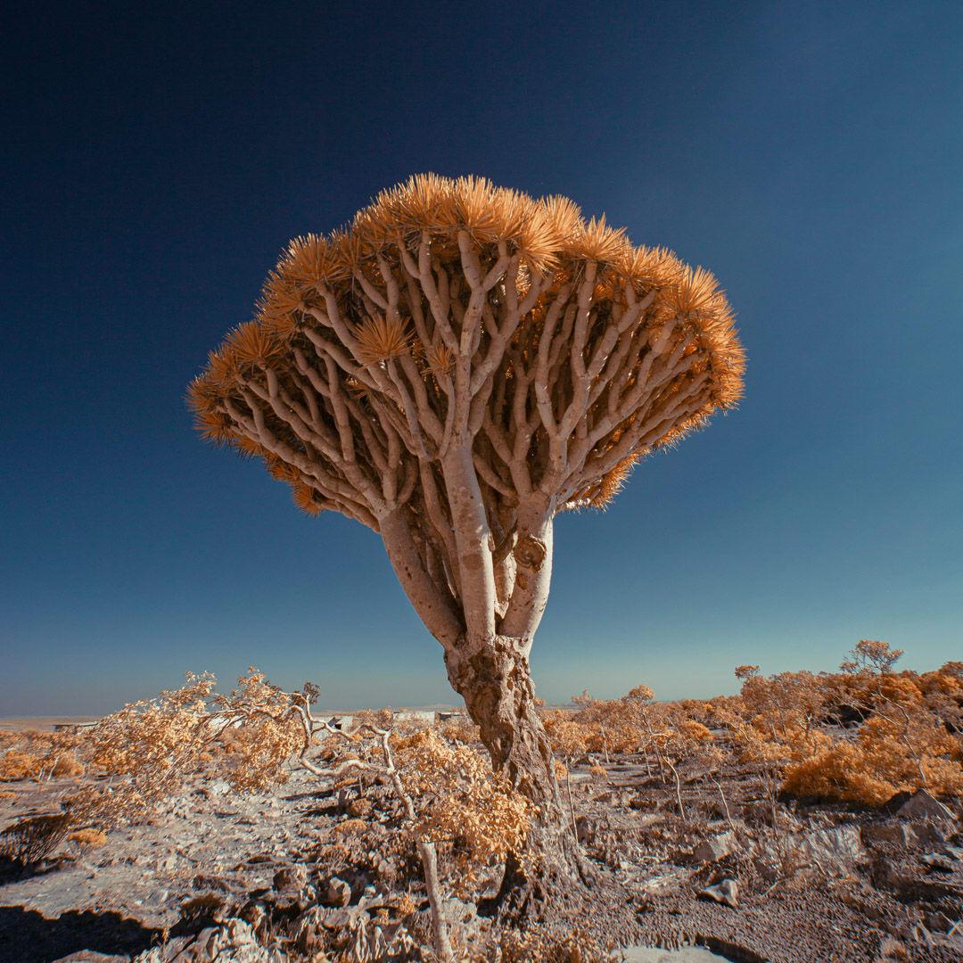 """موطن لأندر الأشجار الموجودة على الأرض..تعرّف إلى """"الجزيرة المباركة"""" في اليمن"""