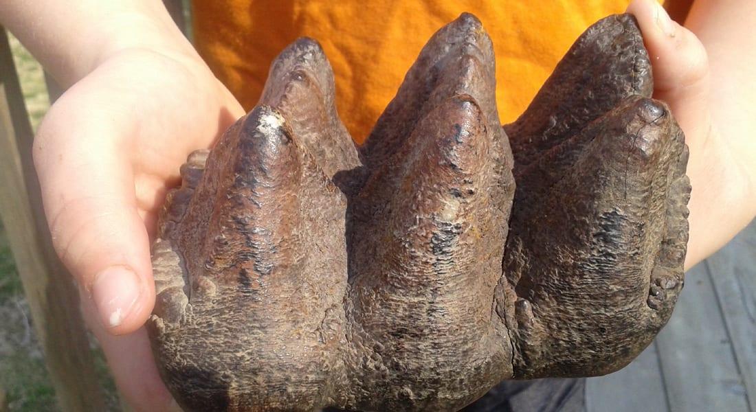 أمريكا: صبي يتعثر بأسنان عملاقة لمخلوق ضخم