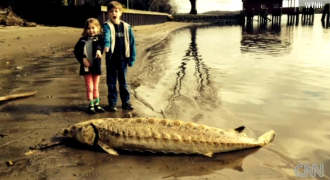 سمكة نادرة بعمر 60 مليون عام تحدث ضجة