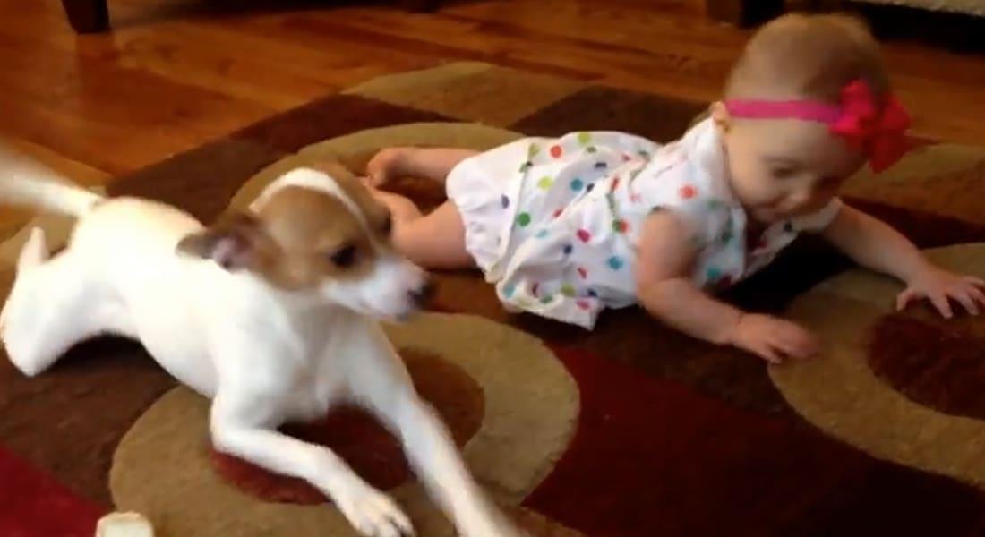 بالفيديو.. كلب يعلم رضيعة الحبو