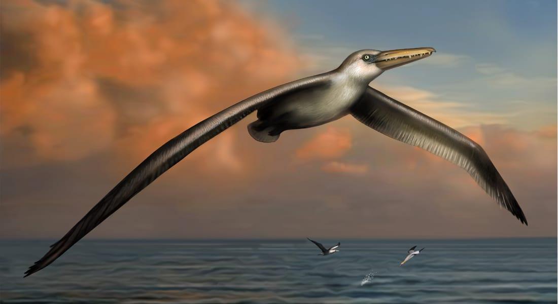 علماء يكتشفون أكبر طائر في العالم