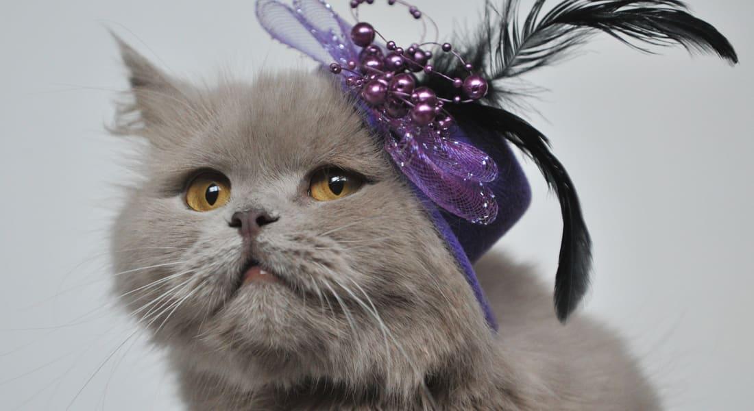 خذ رهناً عقارياً لتربح قطة.. آثار عقوبات روسيا الاقتصادية على بنوكها