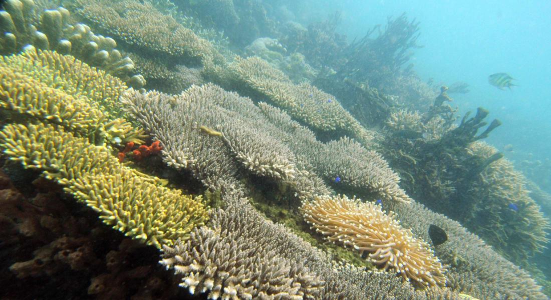 """مختبر لاستزراع """"الشعاب المرجانية"""" بوسط صحراء النقب للمساعدة في """"إنبات العظام البشرية"""""""