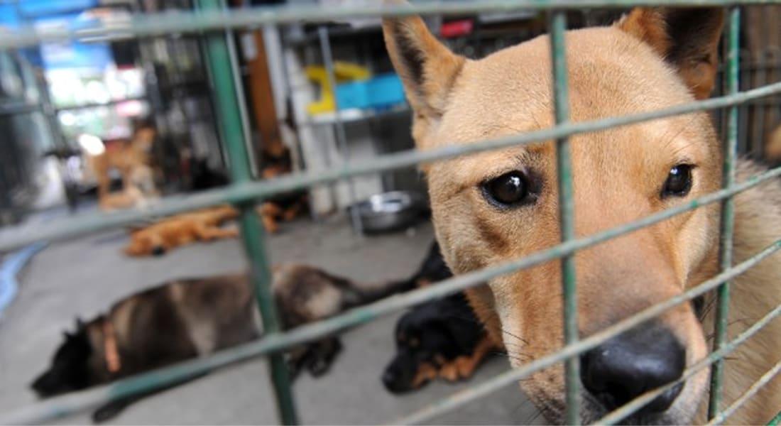 الصين تعدم 5000 كلب في مدينة واحدة