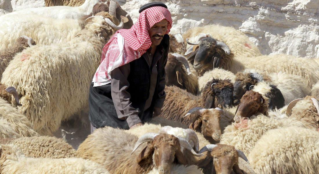 """باحثة إسلامية: اللحوم الحلال أفضل علميا بفضل """"التسمية"""" و""""التزكية"""".. وعقود إسلامية عديدة لتمويلها"""