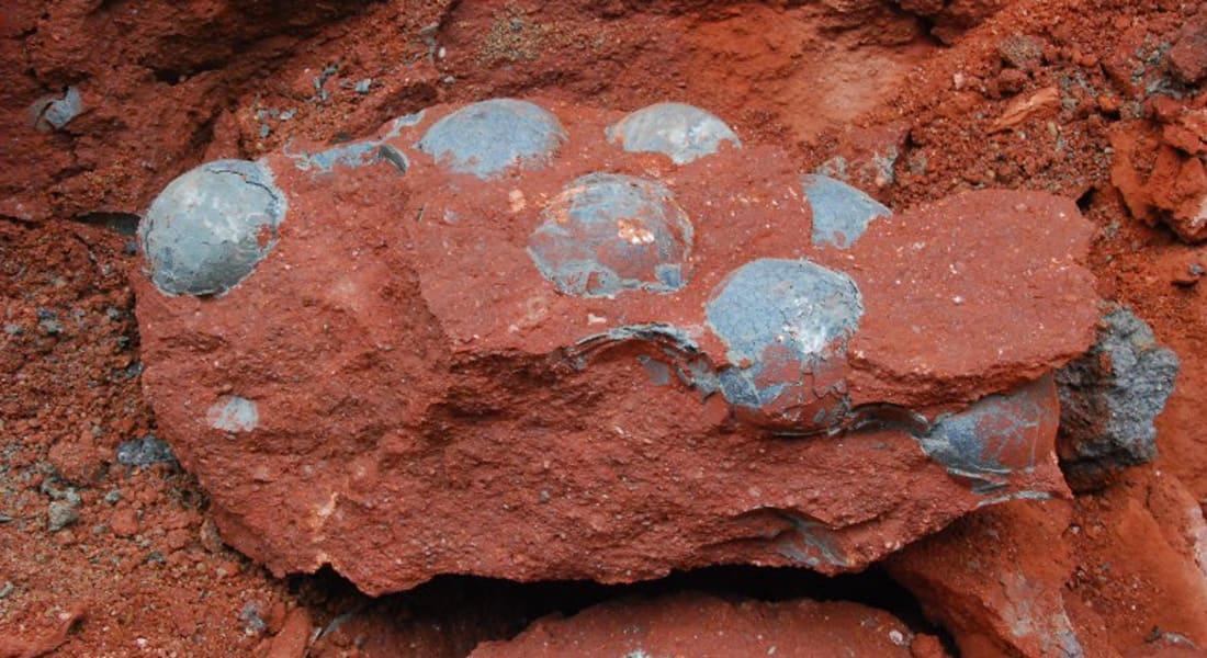 """العثور على 43 بيضة ديناصور متحجرة في """"موطن الديناصورات"""" بالصين"""