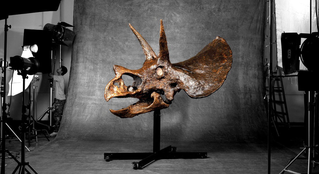 أكبر جمجمة كاملة لديناصور تعرض في مزاد بمليوني دولار