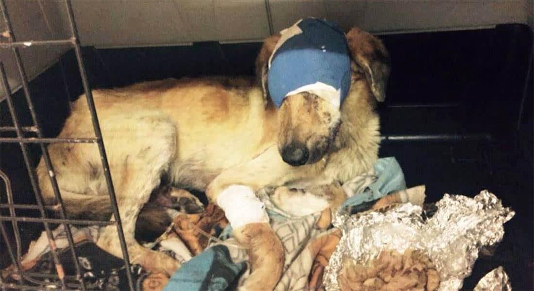 مغاربة يطالبون رئيس الحكومة بإحقاق العدالة لكلب اقتلع مجهول عينيه