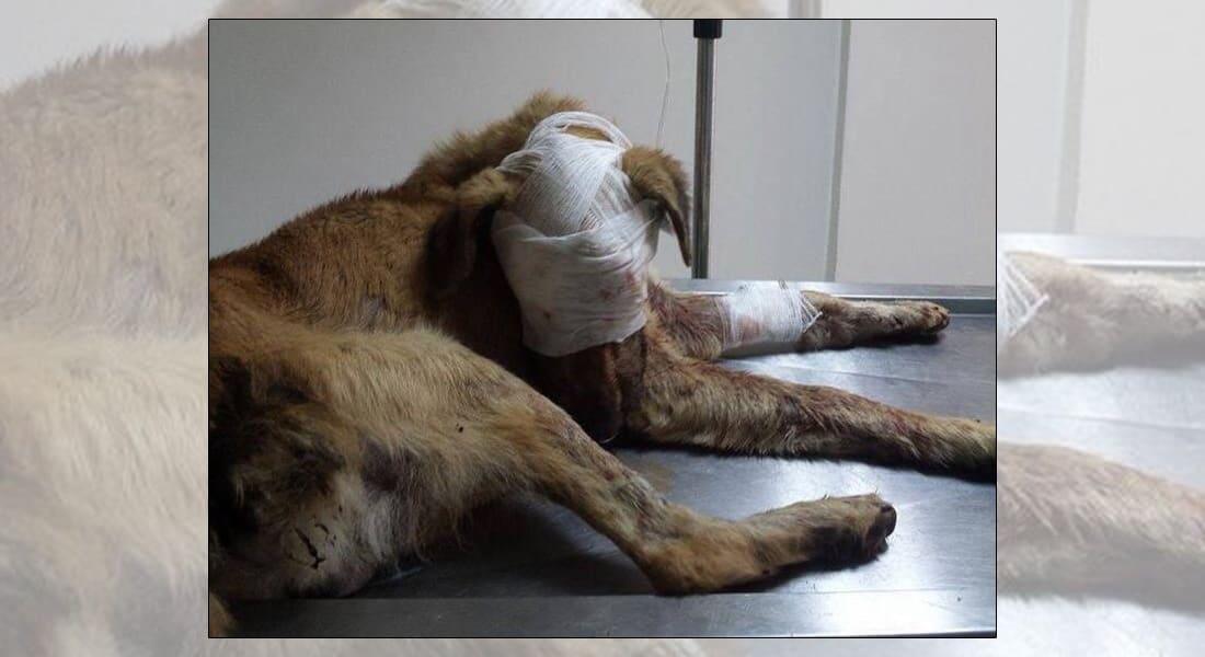 """متطوعة في قضية الكلب """"راي"""": الدفاع عن الحيوان يجعلنا أكثر إنسانية"""