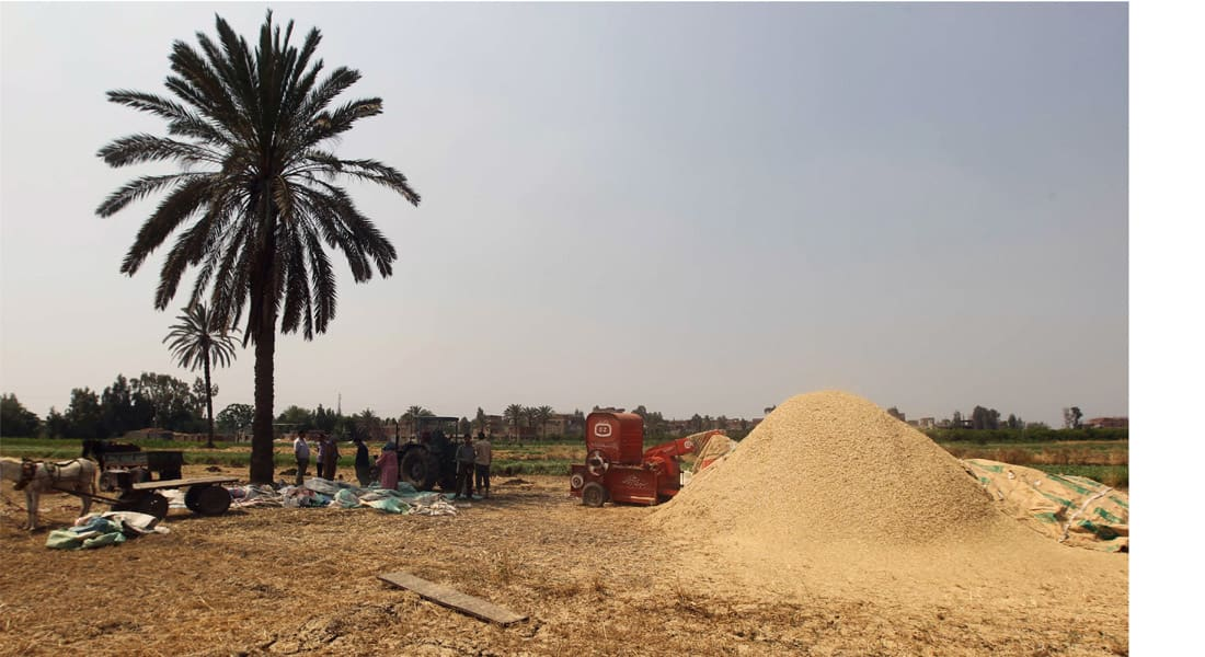 مصر تدرس شراء القمح الروسي مقابل الدفع بالروبل