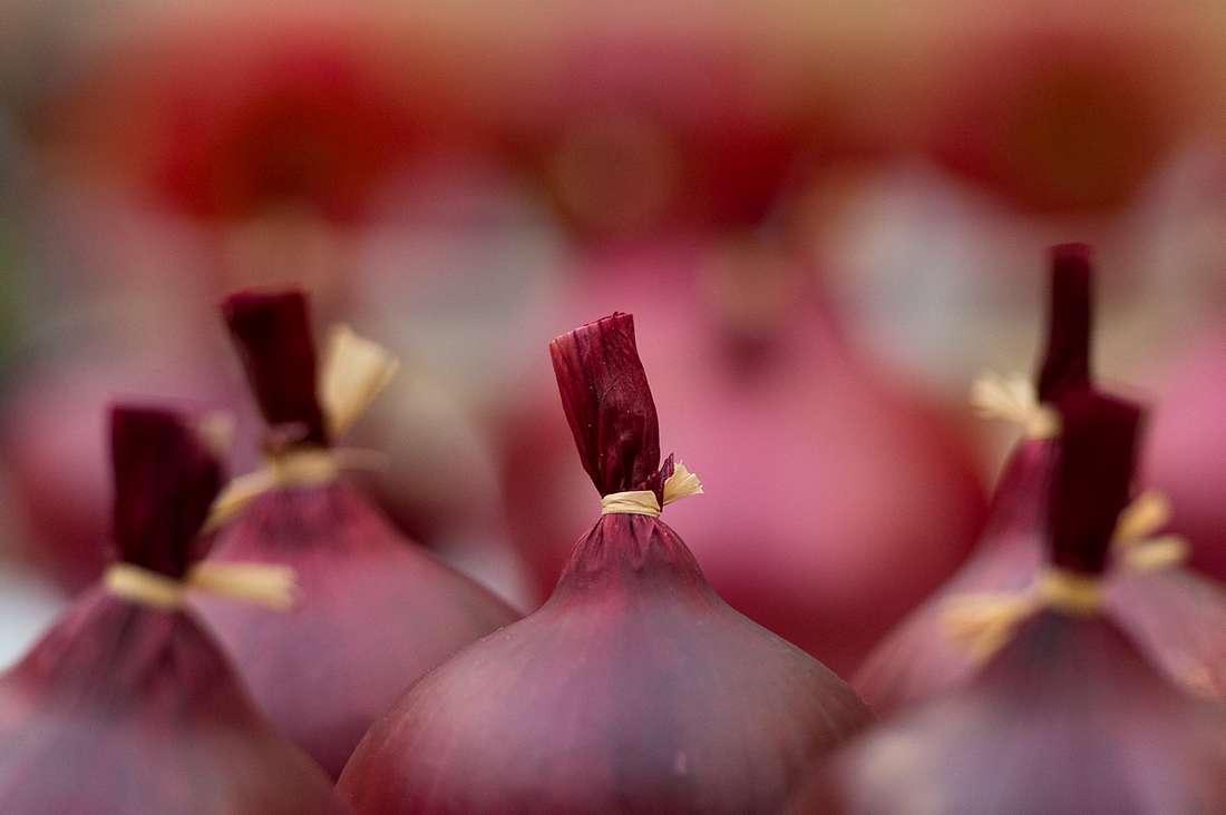 ثمن البصل في المغرب يصل مستويات قياسية وتراجع واضح في استهلاكه
