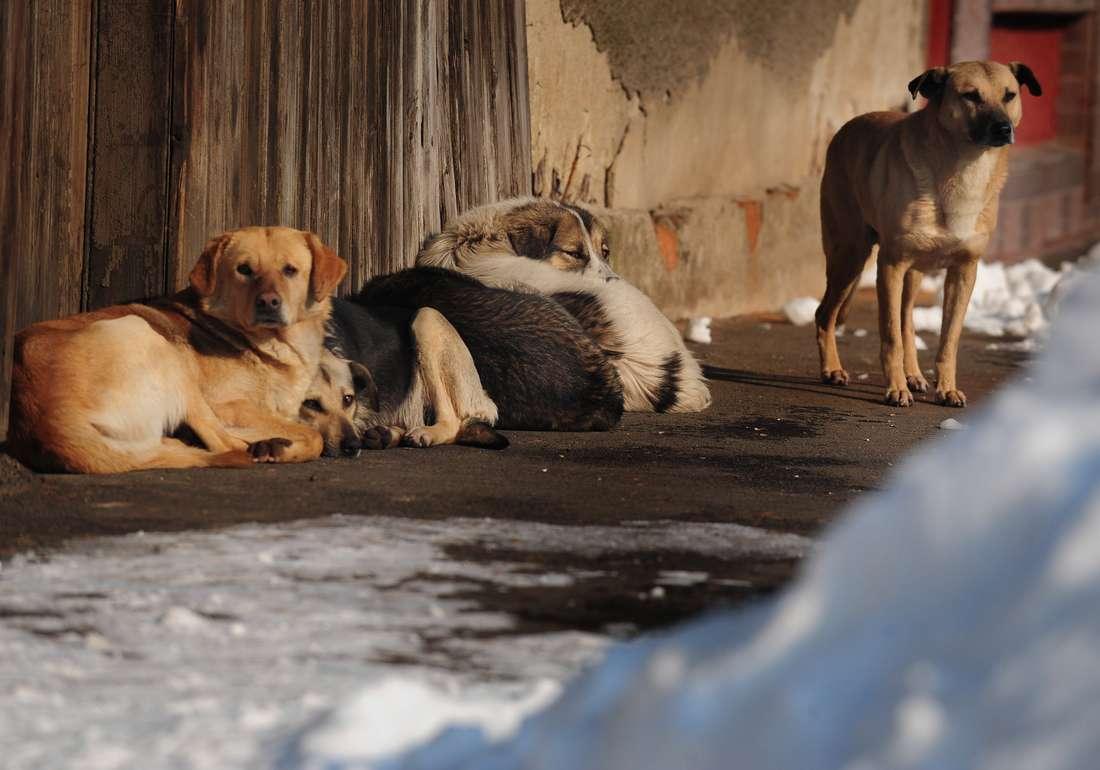 إعدام الكلاب في المغرب بالرصاص الحي يثير حفيظة مدافعين عن الحيوانات