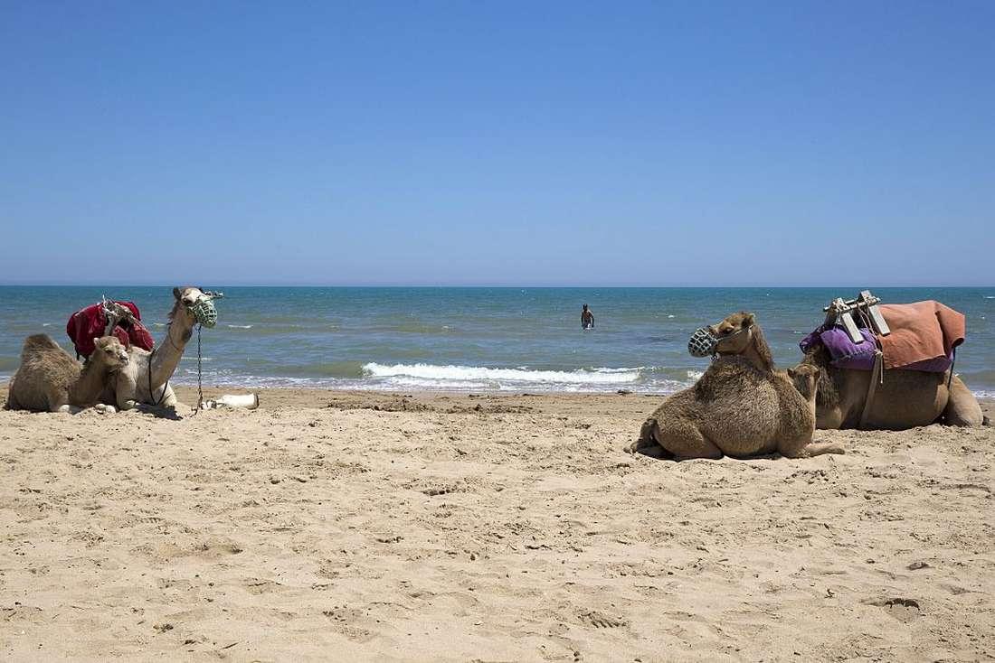 تونس تفتح المجال أمام المستثمرين السعوديين لملكية الأراضي في الساحل
