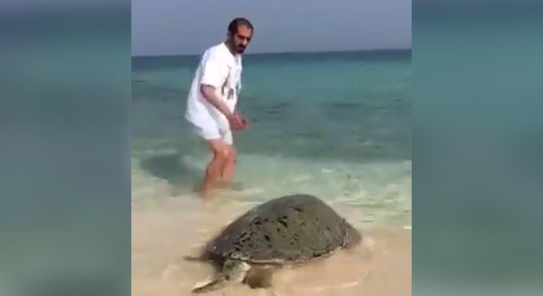 الأميرة هيا بنت الحسين تنشر فيديو لحاكم دبي ينقذ سلحفاة على الشواطئ الإماراتية
