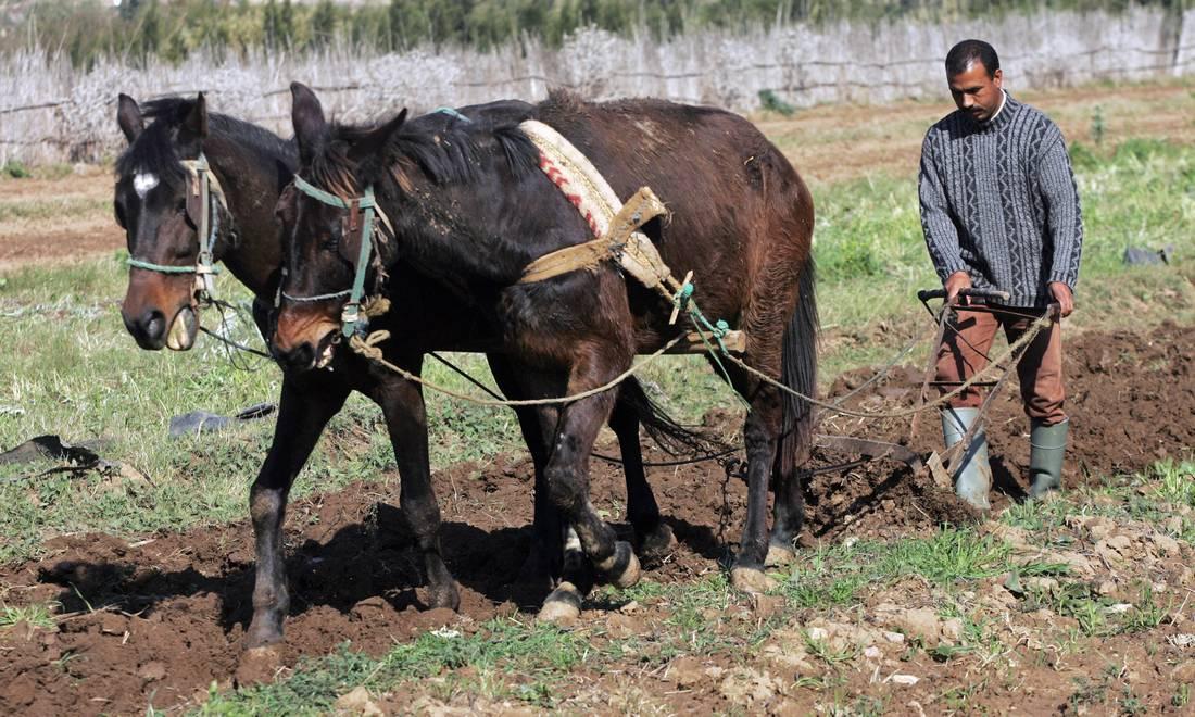مزارعون مغاربة يواجهون إنذارات ببيع أراضٍ يستغلونها في المزاد العلني