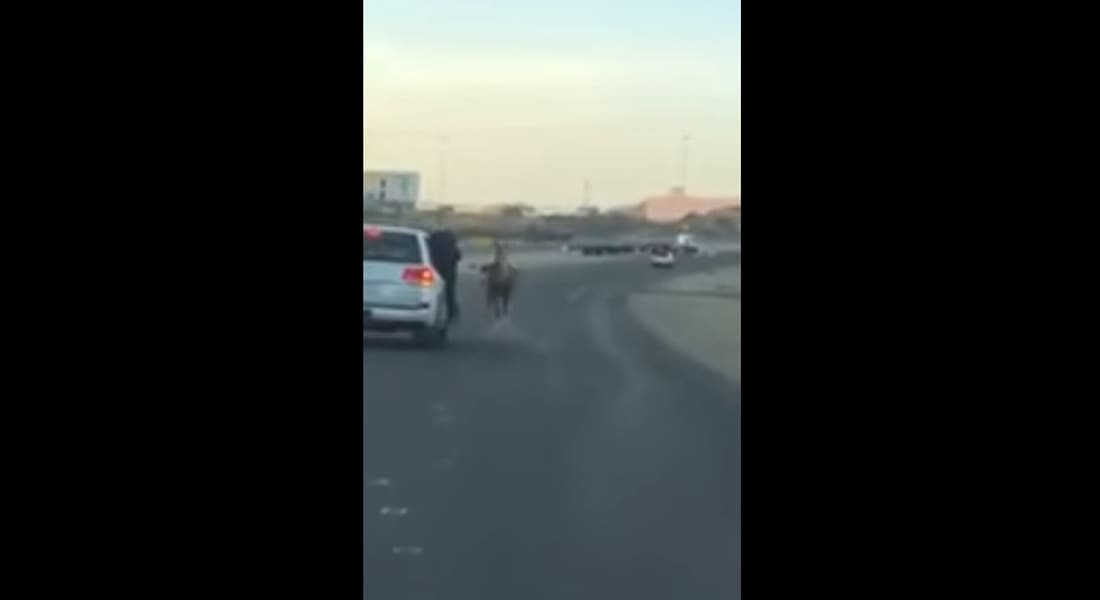 """شاب يقفز عن حصان ليتعلّق بمركبة مسرعة في السعودية.. و""""المرور"""" يتحرك"""