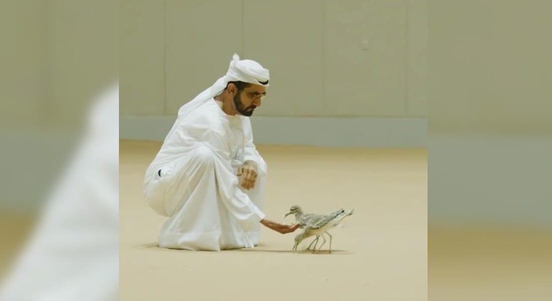 شاهد.. حاكم دبي يشارك مع متابعيه فيديو إطعامه طيور الحبارى