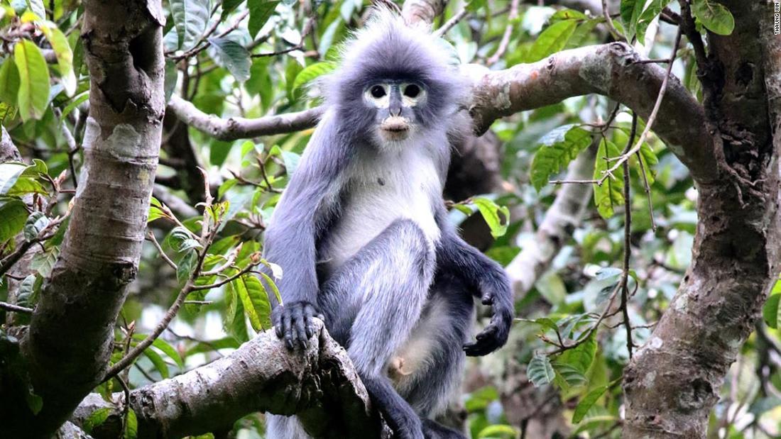 منها قرد مهدد بالانقراض.. متحف بلندن يطلق تسميات على 503 نوع جديد من الكائنات الحية