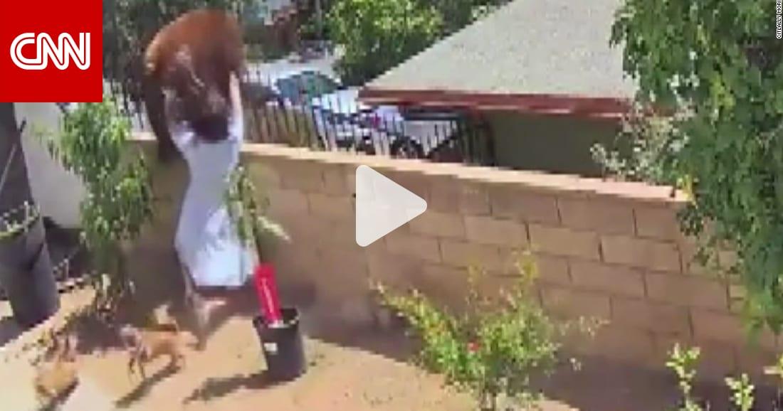 كاميرا مراقبة ترصد لحظة مرعبة لفتاة واجهت دبا ضخما لتنقذ كلابها
