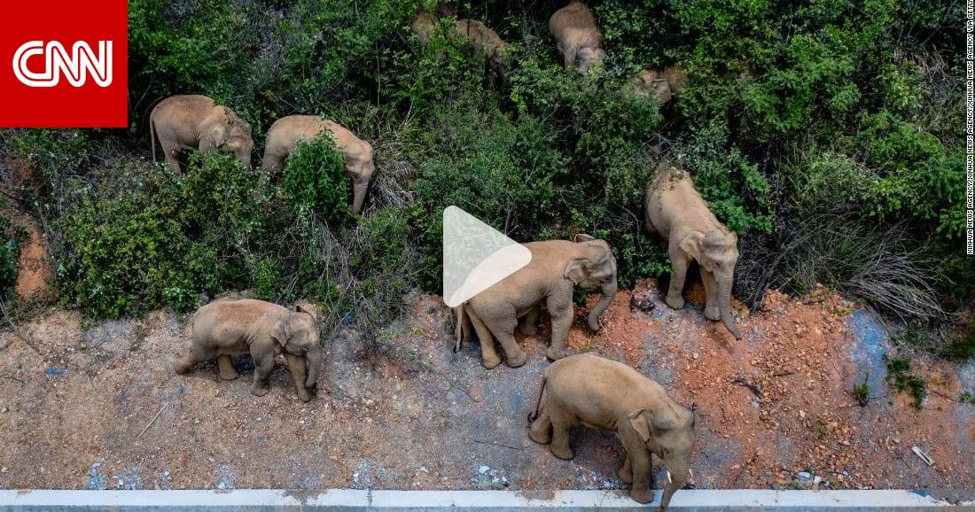 دمرت ما في طريقها.. كاميرات ترصد هجرة غريبة لقطيع أفيال آسيوية