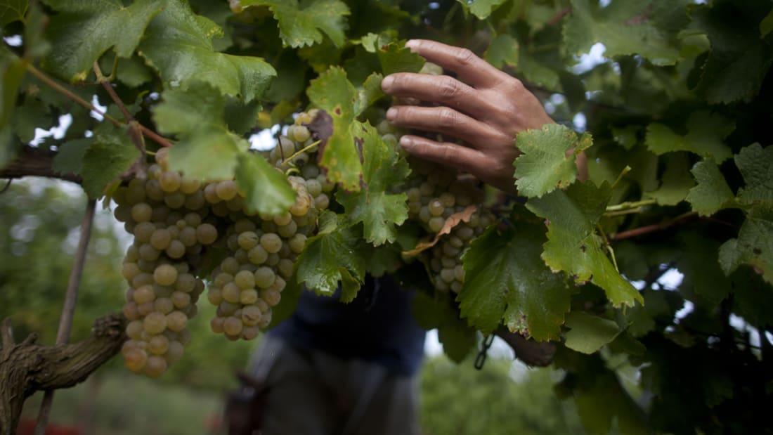 بجوار الحرب الدامية.. يأتي السياح لتذوق نبيذ الجولان