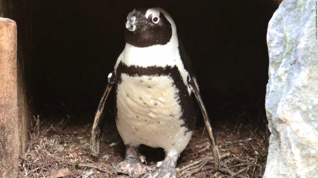 بطريقة غير متوقعة.. حديقة حيوانات تكشف عن جنس مولود باندا