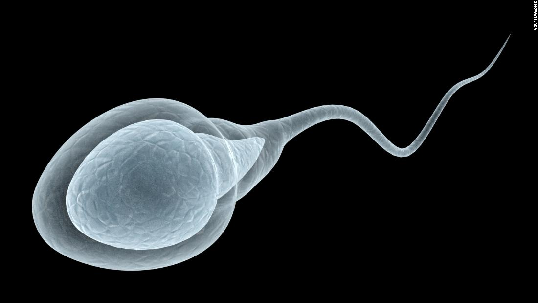 200730155024-a-3d-renedering-of-how-sperm-actually-moves-super-169.jpg