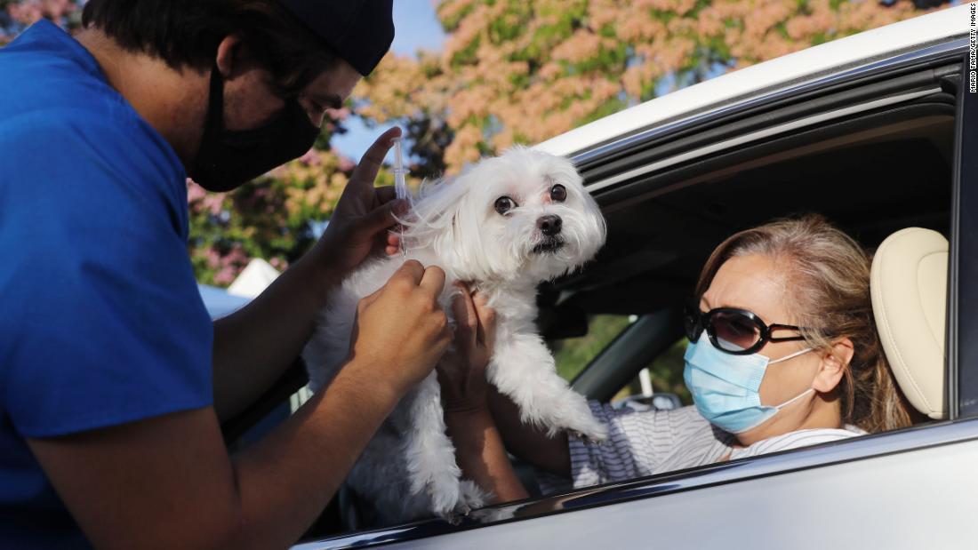 كيف يمكن أن تساعدك الحيوانات الألفية على تحسين صحتك الجسدية والنفسية؟