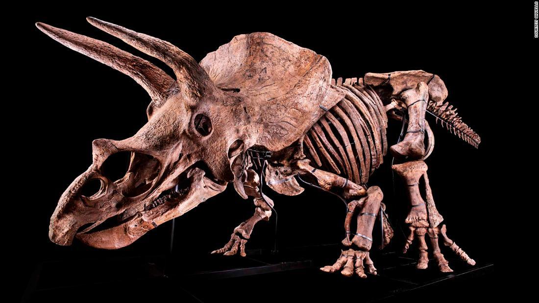 الأغلى بالعالم.. هيكل عظمي لديناصور يحصد 31.8 مليون دولار ويحطم الرقم القياسي