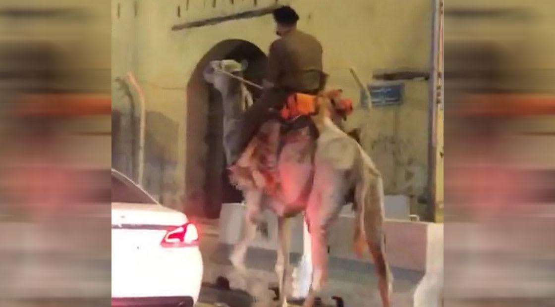 صو رة نشرتها إمارة مكة للشخص على ظهر جمل مرتديا زيا عسكريا