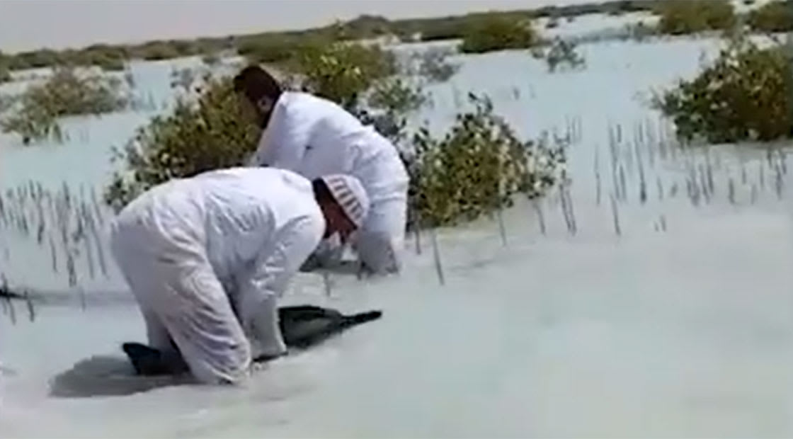 بعد ظاهرة جنوح عشرات الدلافين في السعودية.. سفير بريطانيا يصور فيديو في المنطقة