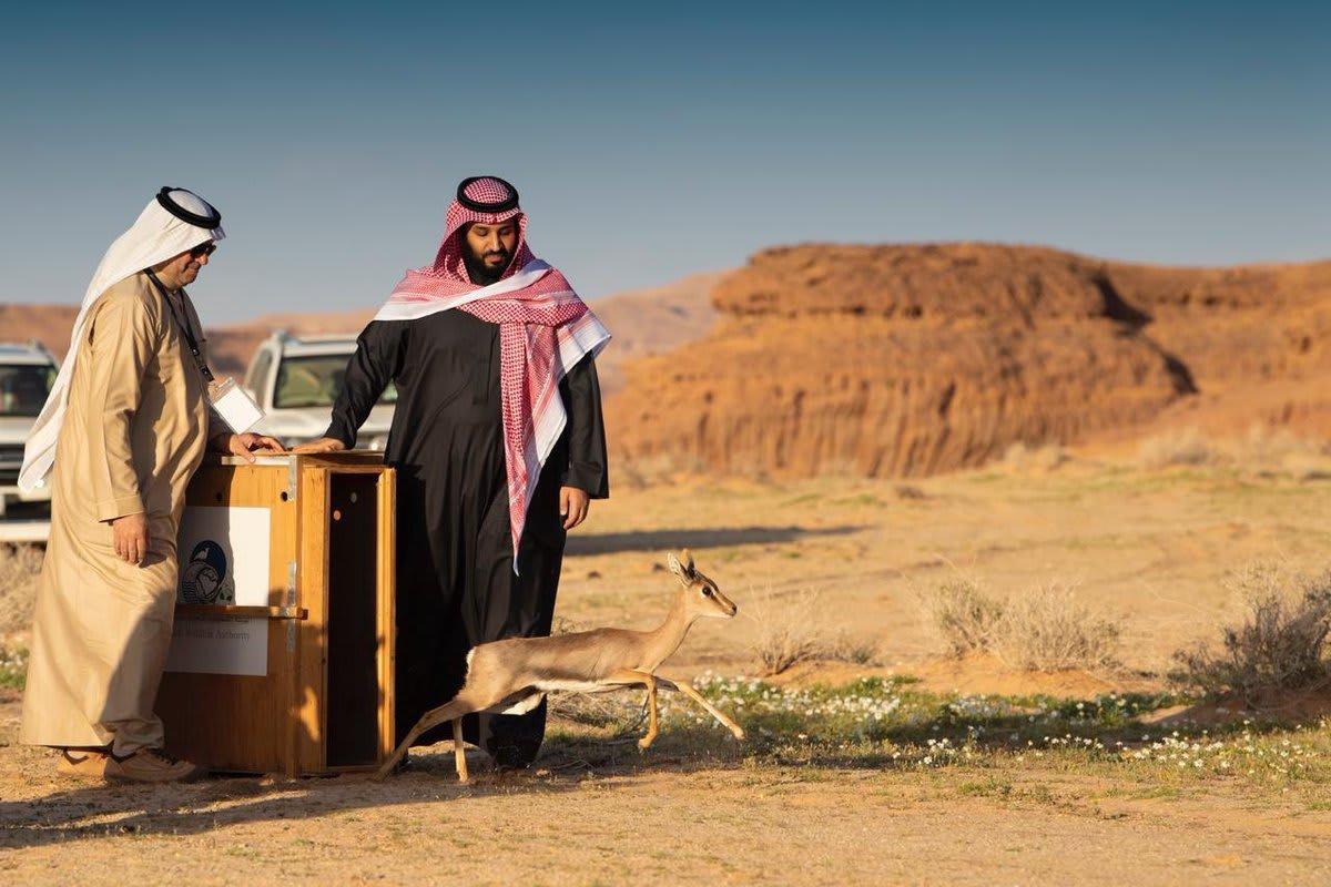 ولي عهد السعودية يطلق محمية شرعان الطبيعية بالعلا