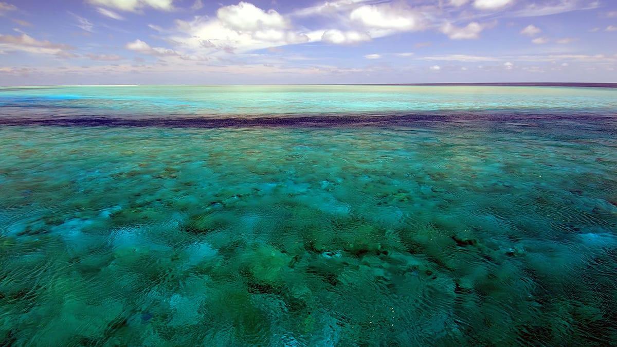 """في مشهد نادر..سمكة """"القرش الحوت"""" تسبح على سطح البحر بتايلاند"""