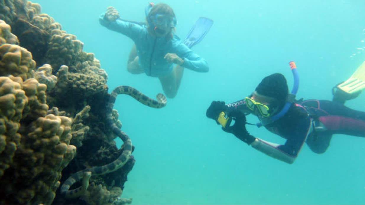 جدات يكشفن عن عدد كبير من ثعابين البحر المميتة في خليج شهير