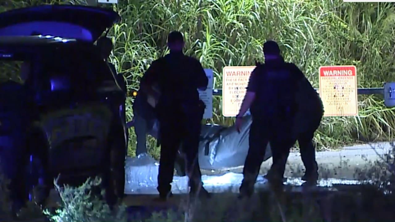 بالفيديو: الشرطة الأمريكية تعثر على بقايا جثة محاطة بالتماسيح