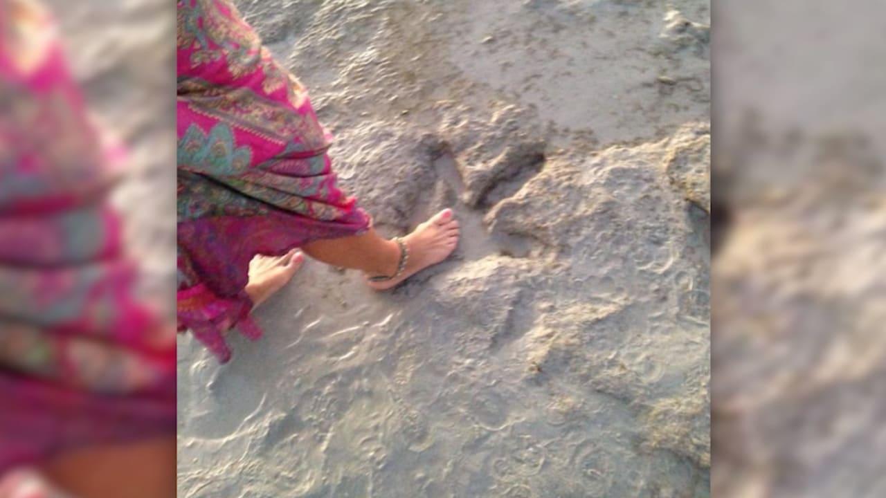 العثور على طبعة لقدم ديناصور عمرها 130 مليون عام في أستراليا