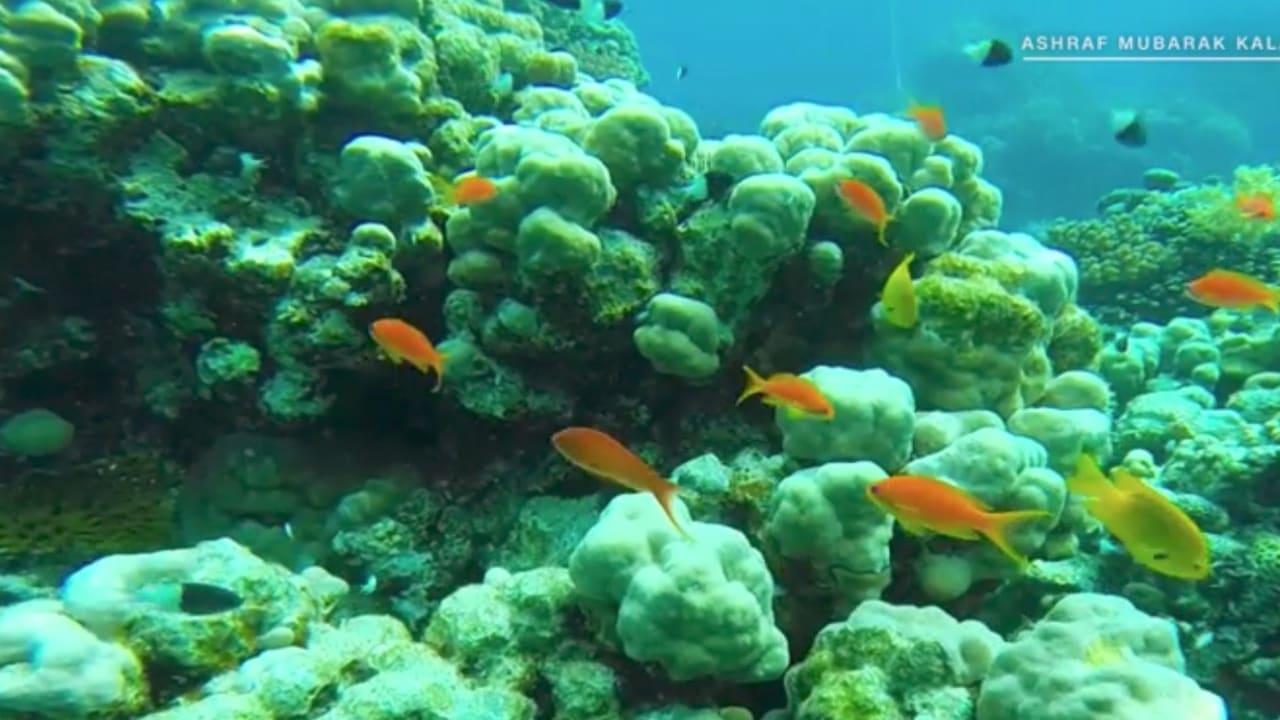 """تعرّف إلى تجربة الغوص """"الجداوية"""" في البحر الأحمر"""
