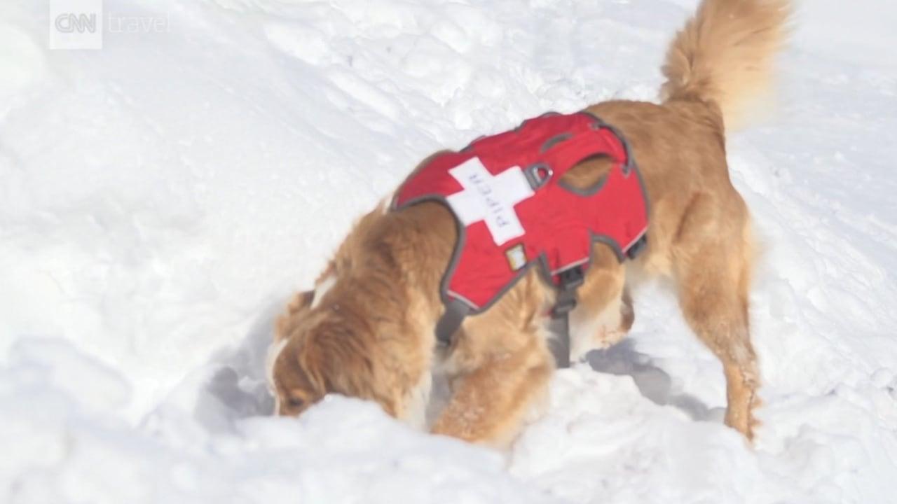 كيف تتحول جراء صغيرة إلى كلاب للإنقاذ؟