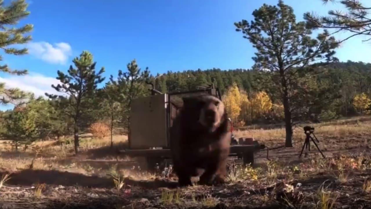 قبل تحطمها بلحظات.. كاميرا ترصد ما حدث أثناء إطلاق دببة في الغابة