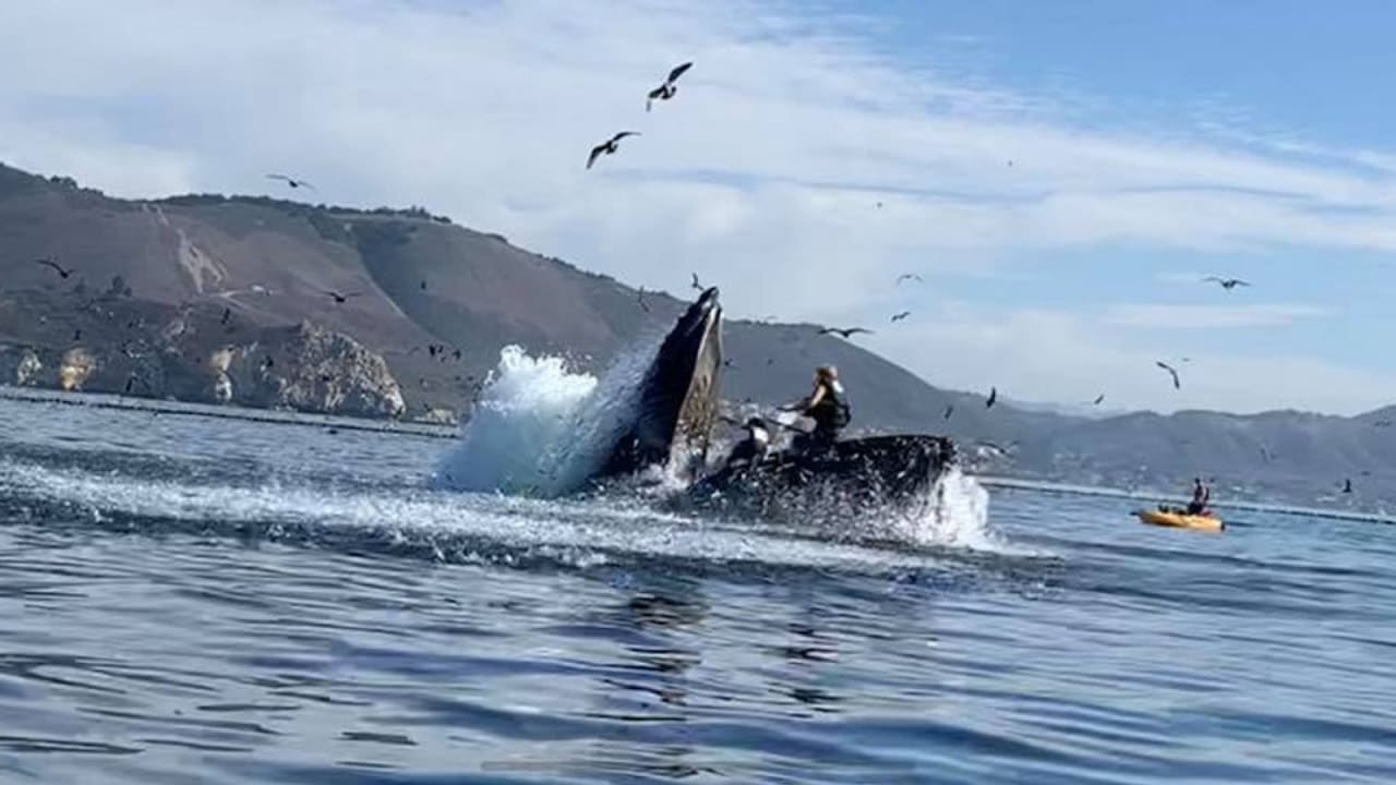 شاهد لحظة قفز حوت فوق راكبتي قارب كاياك
