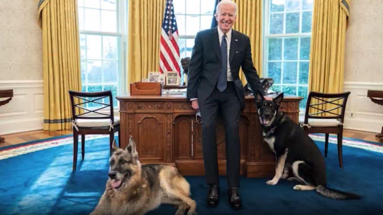 أحدهما عض رجل أمن.. نقل كلبي بايدن إلى خارج البيت الأبيض