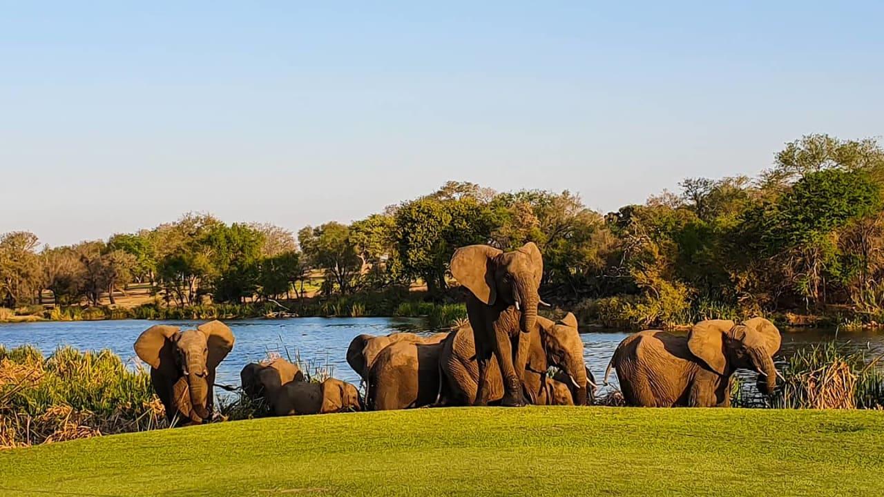 بهذا الملعب الذي لا يحيط به سياج بجنوب أفريقيا.. ستمارس الغولف بين الفيلة والأسود