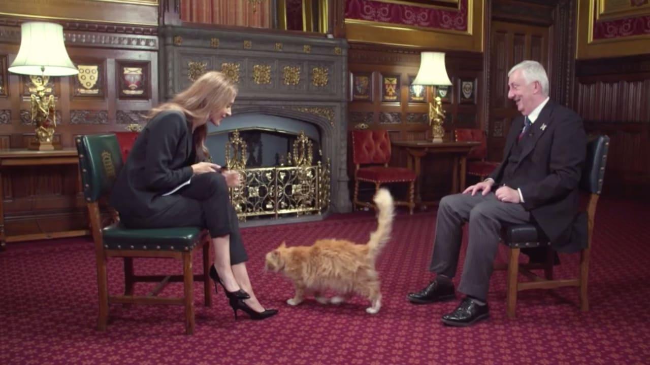 شاهد.. قط يفاجىء مذيعة CNN على الهواء خلال مقابلة مع رئيس مجلس العموم البريطاني