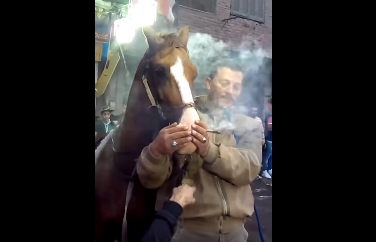 """مصر: نائب يطلب التحقيق بواقعة إجبار حصان على """"التحشيش"""" والرقص"""