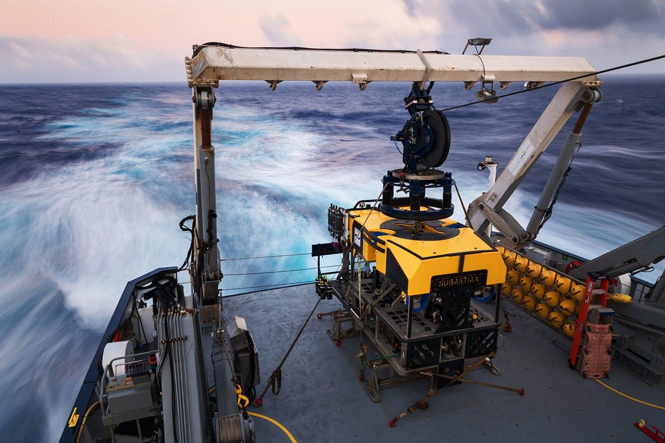 لأول مرة..علماء المحيطات يكتشفون حبار نادر في أعماق المحيط بأستراليا