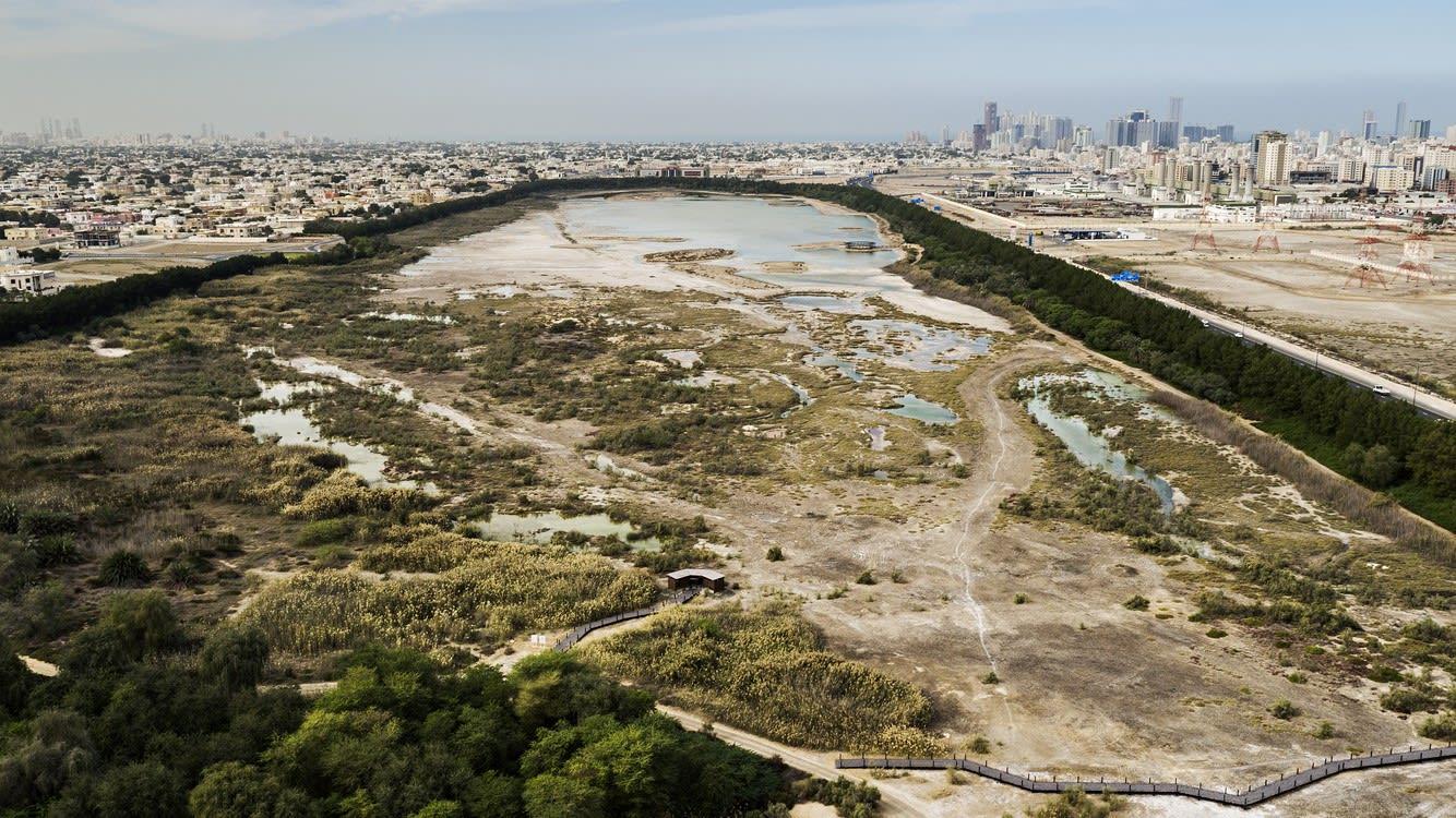 مركز واسط للأراضي الرطبة بالإمارات.. وجهة مثيرة لعشاق السياحة البيئية